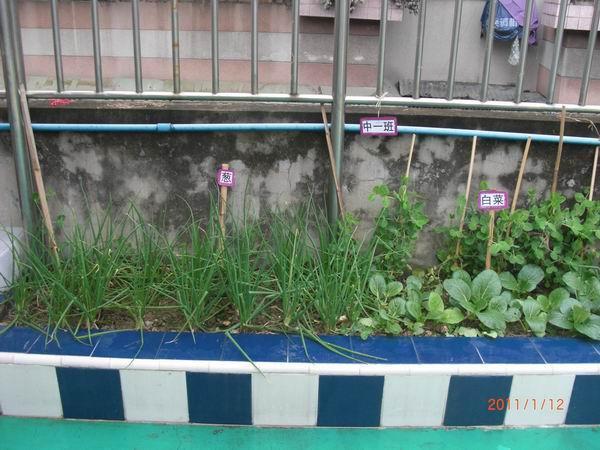 江高镇幼儿园组织环境创设和种植园地评比活动