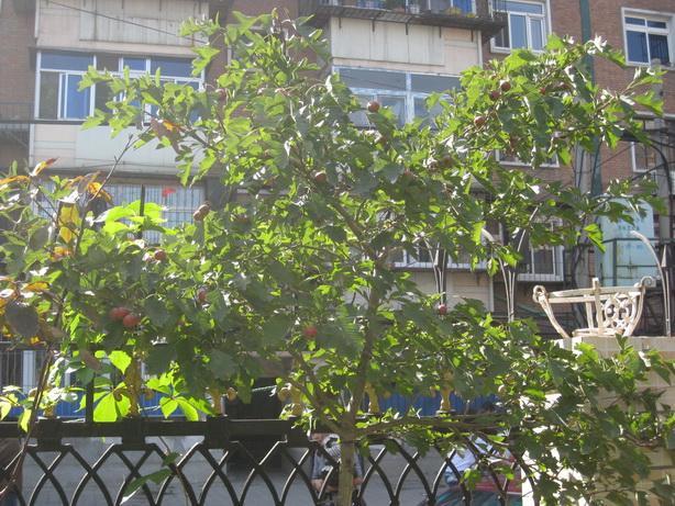 幼儿园果树丰收喽 快来品尝