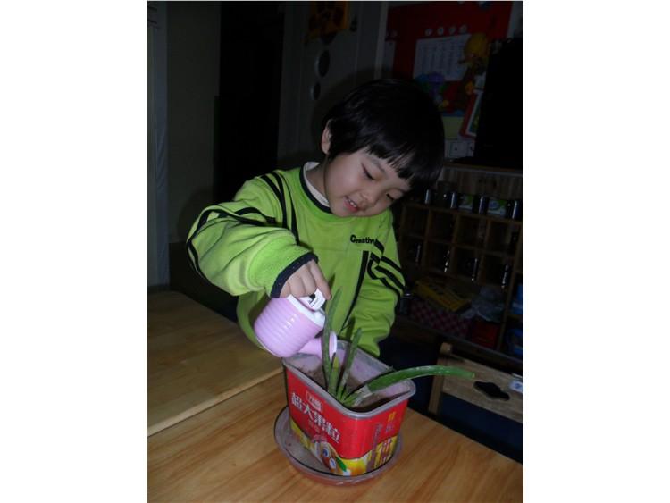 快来看看小朋友们的植树节吧!-小博顿创意幼儿园