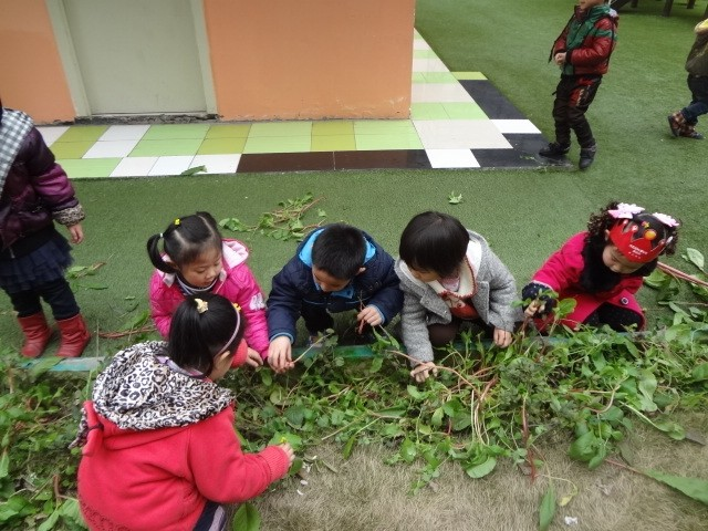 幼儿园种植园地活动