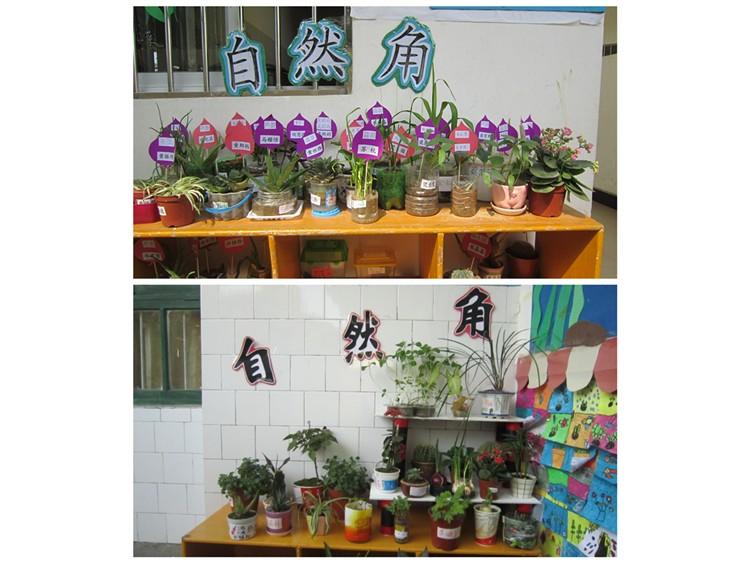 """""""自然角""""创设活动-定远县粮食局幼儿园"""