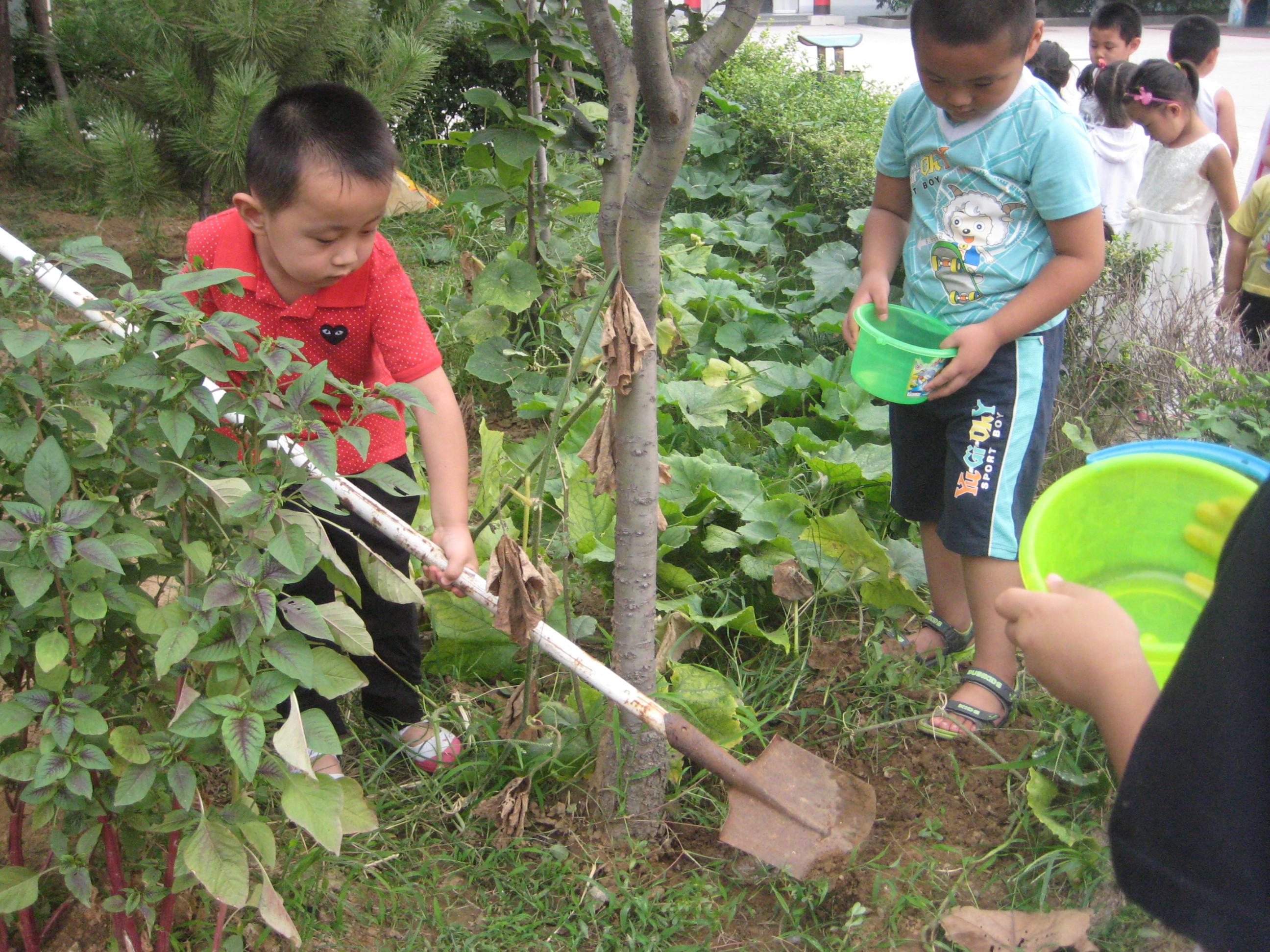 师范附小幼儿园精彩的环保教育活动